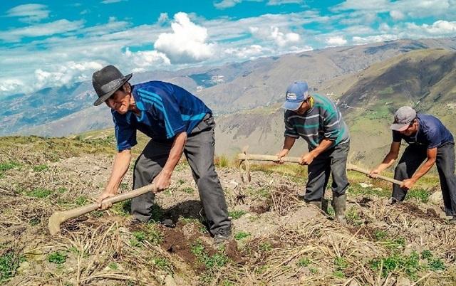 Congreso aprobó crear el Ministerio de Desarrollo Agrario y Riego en reemplazo del Minagri