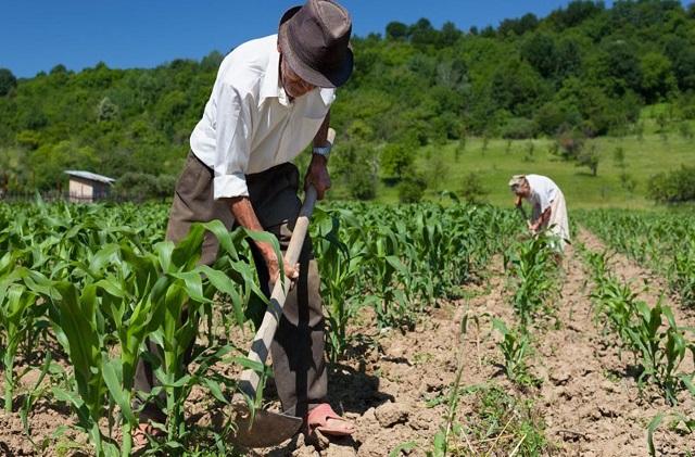 MEMORIAS DE UN FILÓSOFO AGRICULTOR