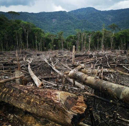 Amazonas: Investigarán a responsables de depredar 3 ha de bosque en Imaza