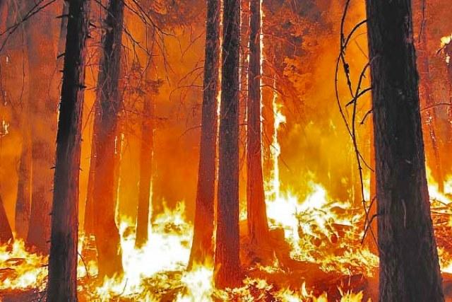 Seguro contra incendios forestales:  Proyecto modifica norma para promover inversiones forestales