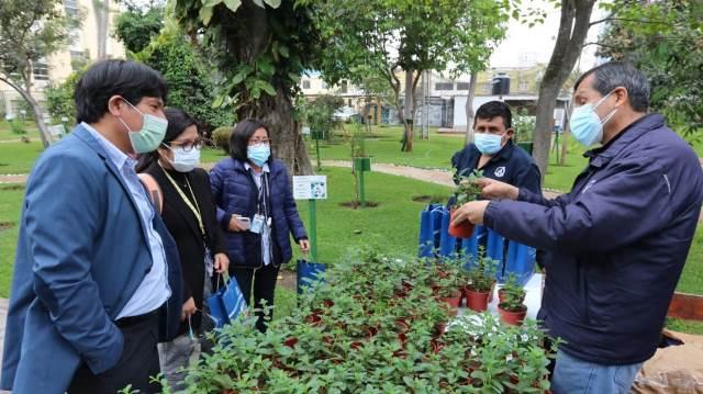 INS obsequió 300 plantas de menta con propiedades terapéuticas por sus 125 aniversario
