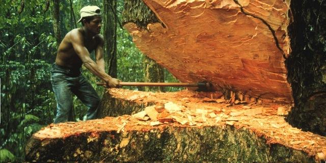 ESCÁNDALO: Informe internacional identifica 34 funcionarios del Gobierno cómplices de lavado de madera producto de tala ilegal