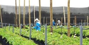 Ingresos de las agroexportadoras vs. sueldos de trabajadores