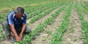 Agricultores en quiebra piden implementar Fondo de Salvataje y Reactivación de la agricultura familiar de S/ 5 mil millones
