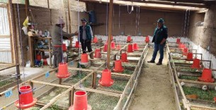 MINAGRI: Agro Rural ejecutará más de 71 millones de dólares para el cofinanciamiento de planes de negocios rurales en cinco departamentos del país