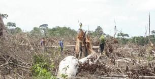Narcotraficantes y taladores causan zozobra en Flor de Ucayali