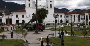 Ayer se talaron las tres palmeras de la Plaza Mayor de Chachapoyas