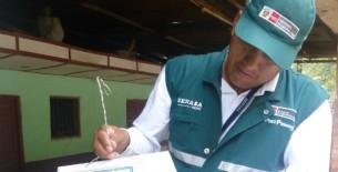 Polilla de la papa: Vigilancia para evitar su ingreso en Amazonas