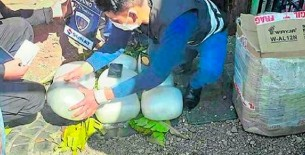 Puno: Un total de 23 kilos de marihuana fueron hallados en el interior de un tráiler