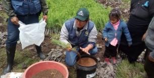 La autoridad regional ambiental continúa con trabajos de recuperación del corredor montañoso Condorpuna- Shipago – Vilaya