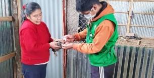 Agencia Agraria Luya desarrolló campaña de vacunación para aves de corral en Longuita